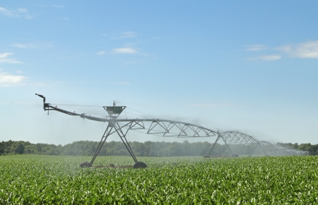 Irrigation equipment watering a crop of corn