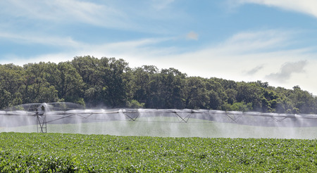 Irragation system watering a field of soybean plants Stok Fotoğraf