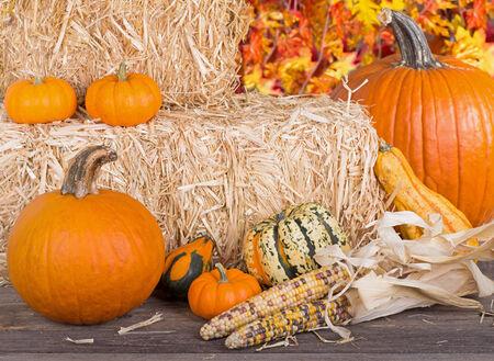 autumn arrangement: Autumn arrangement of pumpkins, gourds, squash and corn with bales of hay