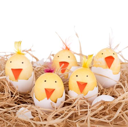 Easter eggs decorated as hatching chicks with a white background