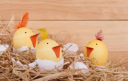 Decorated Easter eggs as hatching yellow chicks