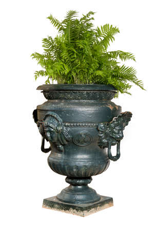 fern  large fern: isolated large blue painted cast iron garden urn with fern plant