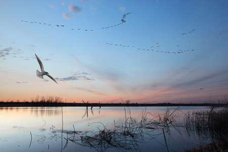 animals hunting: Wilderness lake