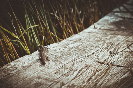 climbed: The lizard climbed on a wooden bench and basking in the sun
