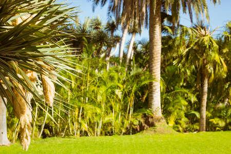santa cruz de tenerife: TENERIFE, SPAIN - JANUARY 15, 2013: Background with palm trees in an exotic Park, Loro parque, Puerto de la Cruz, Santa Cruz de Tenerife, Canary Islands, Spain Stock Photo