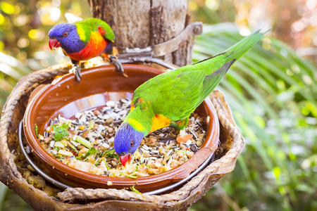 jungle animal: TENERIFE, SPAIN - JANUARY 15, 2013: Bright parrot is feeding from bowl with seeds in Loro Park Loro Parque, Puerto de la Cruz, Santa Cruz de Tenerife, Canary Islands, Spain