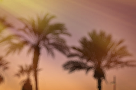 the americas: Blurred background with Palm tree bokeh, bright sunset on the coast, popular canarian resort Playa de Las Americas, Tenerife, Canary Islands, Spain