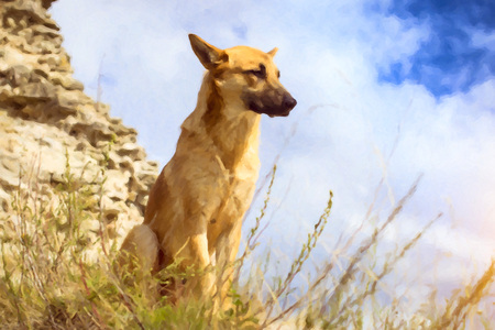 guard dog: Guard dog - German shepherd guarding the ruins of the fortress of Koporye, Russia. Photo stylized watercolor illustration