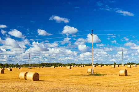Stacks of straw - bales of hay, rolled into stacks left after harvesting of wheat ears, agricultural farm field with gathered crops rural. Energy poles with electric wires. Pargi, Voka, Estonia