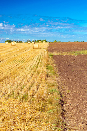 Stacks of straw bales of hay, rolled into stacks left after harvesting of wheat ears, agricultural farm field with gathered crops rural. Straw field bordered with ploughed fertile virgin land. Estonia Stock Photo