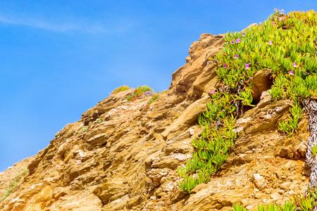 Tropical green Alpine plant with bright purple flowers growing on a rock in the resort village Bali, Crete island, Greece, Beach Evita