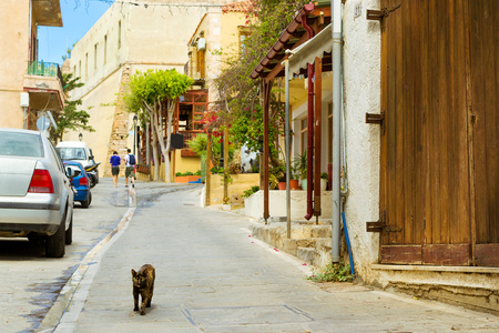 rethymno: Wild black homeless cat walk on city touristic trails. Cars parked on narrow cobbled street. Resort classic Greek architecture in port city Rethymno, Crete, Greece