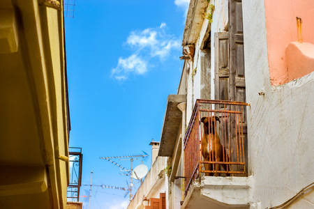 Redhead homemade fighting dog is on the second floor balcony. Pet animal in resort Greek port-city Rethymno, Crete, Greece