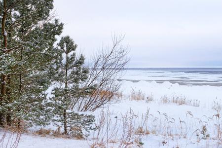 Winter day on snowy shore of Narva Bay. Snow on ice of frozen Finnish gulf. Narva-Joesuu resort town in Estonia in Ida-Virumaa. Severe Northern winter and snowy weather. Pine forest, pinewood