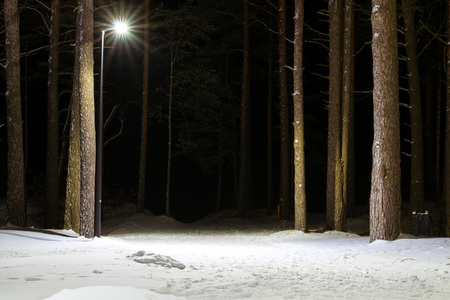 Night severe Northern winter and snowy weather. Evening pine forest, pinewood. Narva-Joesuu resort town in Estonia in Ida-Virumaa. Winter night on snowy shore of Narva Bay. Snow on the ground Imagens