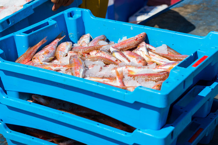 Blue plastic containers with catch of sea fish, ocean delicacies. Industrial catch of fresh fish. Fish auction for wholesalers and restaurants. Blanes Spain, Costa Brava. Summer fishing in port Blanes