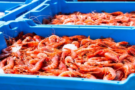 Blue plastic containers with catch of sea Royal shrimps, ocean prawns delicacies. Fish auction for wholesalers and restaurants. Blanes, Spain, Costa Brava. Industrial catch of fresh seafood