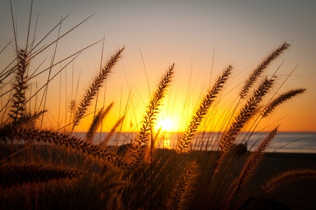 Tall Grassy Sunrise in Mexico Stock Photo - 9695487