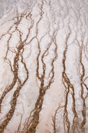 Stock Photo: Natures Artwork. Natural design in the ground created by minerals & algae in Yellowstone National Park Banco de Imagens