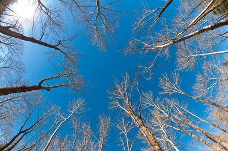 Looking up at tree tops with a fisheye lens giving the sense of being closed in & surrounded by the trees