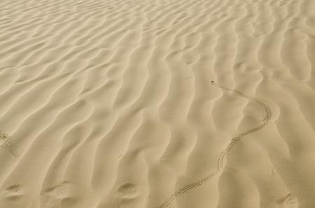 sandhills: Sandy waves texture   beetle trails