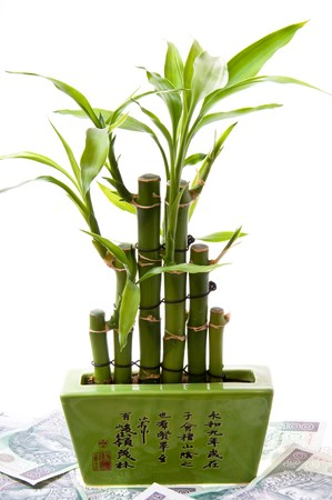 successes: Lucky bamboo being based on scattered banknotes. Symbol of financial happiness. Successes on business. Stock Photo