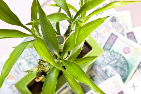 successes: Lucky bamb� � basata sulle banconote sparse. Simbolo della felicit� finanziaria. Successi per le imprese.
