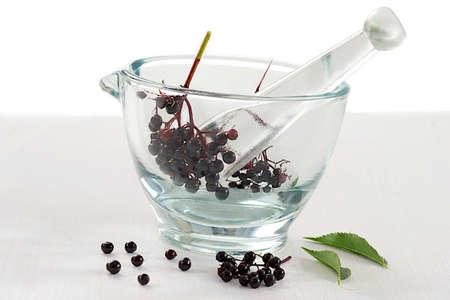 elder tree: Elderberry  Sambucus ebulus  fruit in glass mortar Stock Photo