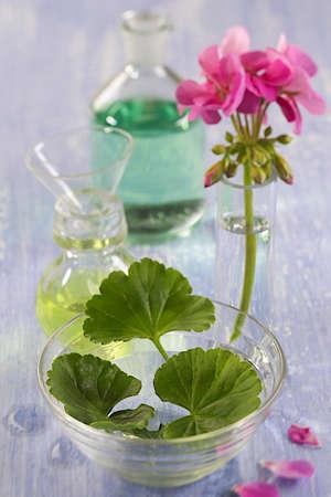 geranium: geranium essential oil and decoction