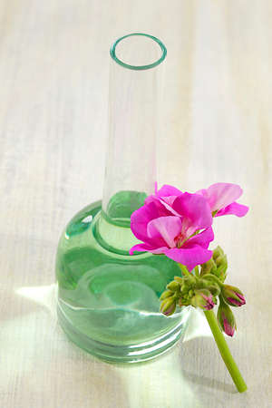 herbal remedy: geranium essential oil