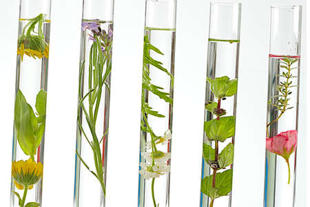 aromatherapy oils: solution of medicinal plants and flowers - Decorative Objects-flowers on test tubes  Stock Photo