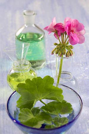 geranium essential oil and decoction photo