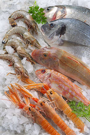 sparus:  fish market variety of see food Stock Photo