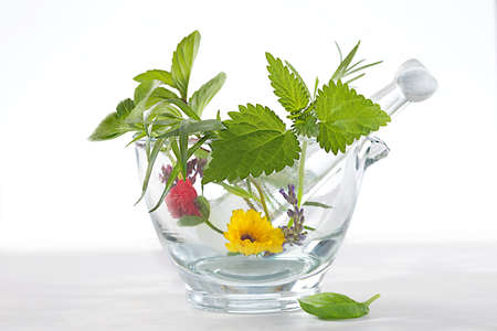 nettle: plants in glass mrtar for phythoterapy Stock Photo