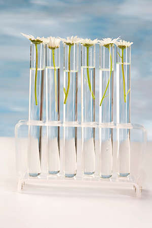 Daisy Plant grows in test tube concept of similarity, and cloning  photo
