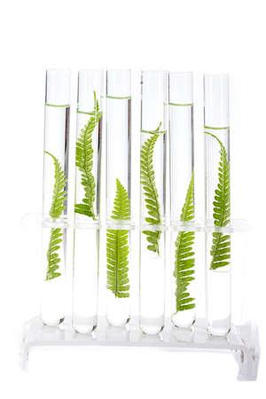 clonacion: Planta crece en concepto de tubo de ensayo de similitud, y la clonaci�n