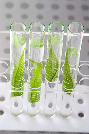 cloning: Plant grows in test tube concept of similarity, and cloning