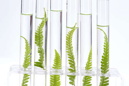 similarity: Plant grows in test tube concept of similarity, and cloning
