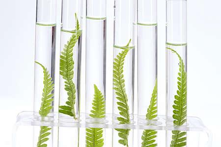 probeta: Planta crece en concepto de tubo de ensayo de similitud, y la clonación