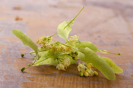 lime blossom: Dried Linden Flowers Isolated on old wooden Background