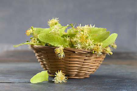 hepatic: medical linden flowers harvest wicker basket
