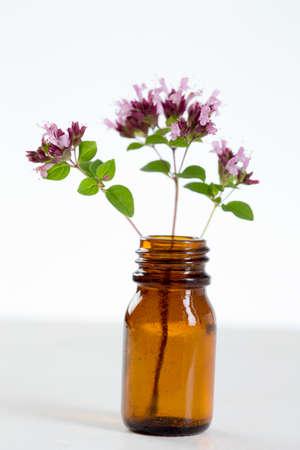 Flowers of oregano Standard-Bild