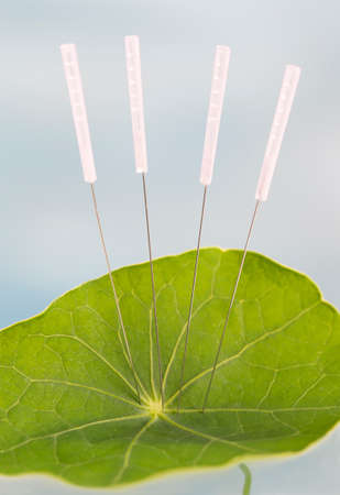 cupuncture needles in Nasturnim leaf. The veins in the leaf That Represent the energy lines acupuncturists use to cure various dockage. photo