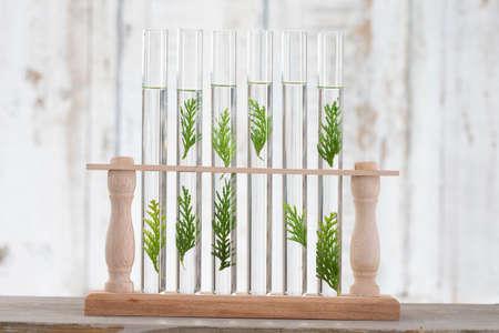 plantas medicinales: solución de las plantas medicinales y flores - Objetos decorativos-Medicina Herbal