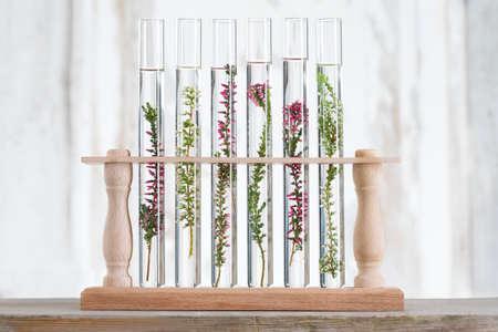 oplossing van geneeskrachtige planten en bloemen - Decoratieve Objecten-bloemen in reageerbuizen Stockfoto