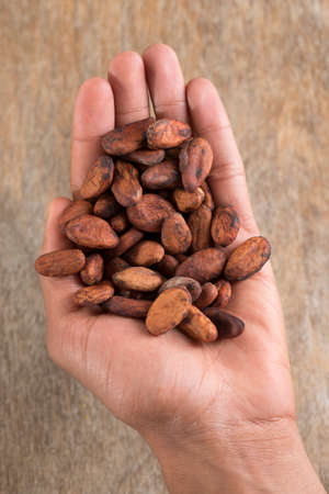 handful: view of handful of cacao beans