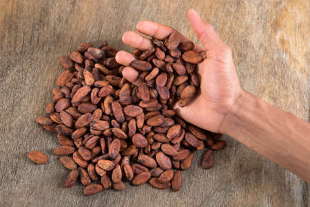 nutritive: roasted cocoa beans in the hand of roster