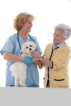 auscultate: veterinarian doctor making check-up of a little doc