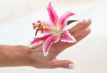 pink lily: Beautiful woman hands and lily flower over white background