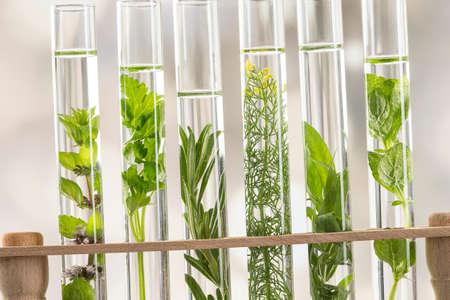 aromatische kruiden -Herbal geneeskundeconcept